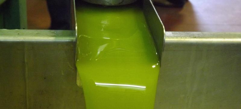 Aceite-de-oliva-de-cosecha-temprana1