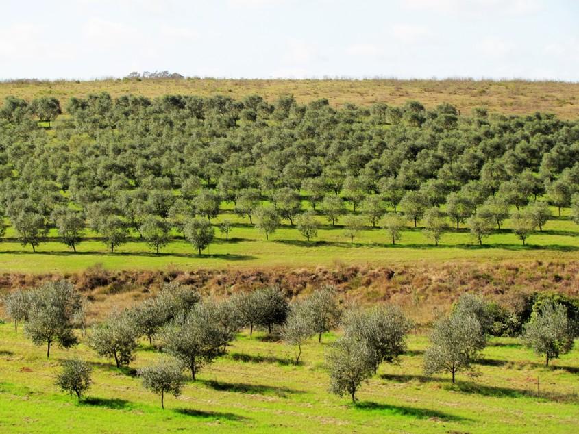 estudio-olivar-mundo