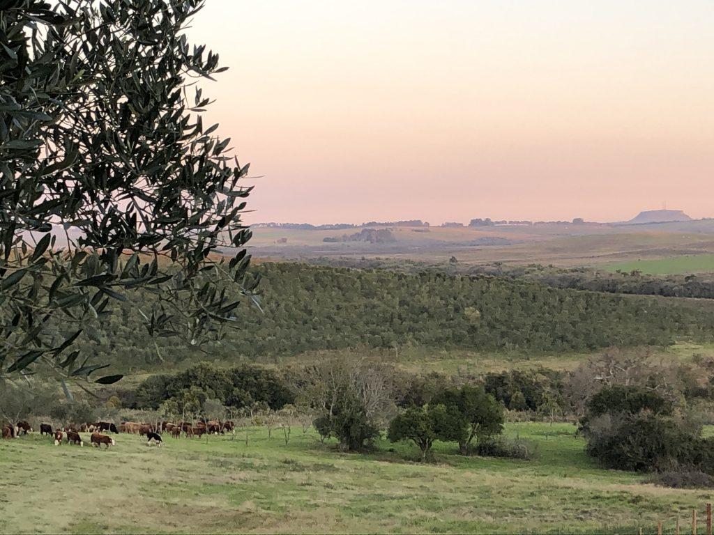 Cerro Palomas
